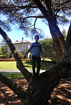 Dan in a tree